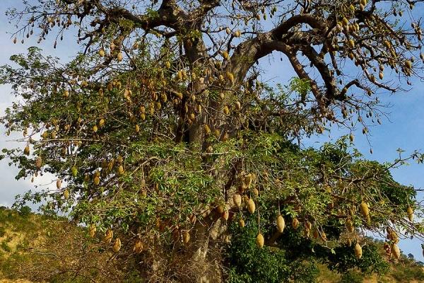 kunst-04-baobabbaum8B8DA180-589A-DE07-AEAD-9C73EE9F77CF.jpg