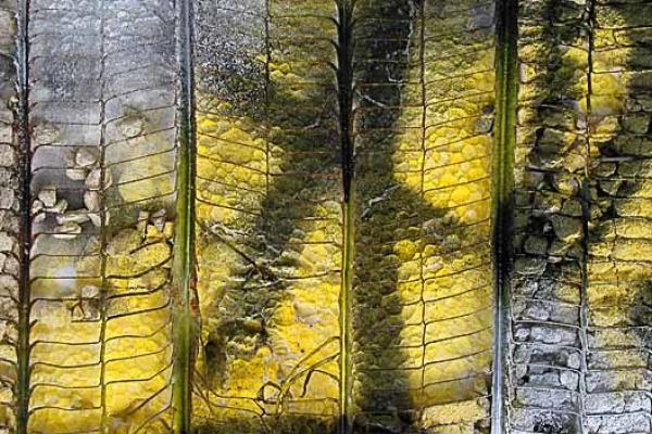 thomas-schulz-farbe-0342190F19-9055-3367-C041-21E26A0CBFAB.jpg